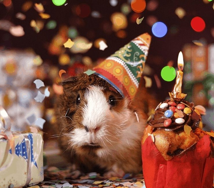 Der Hobbyinvestor Blog feiert seinen dritten Geburtstag